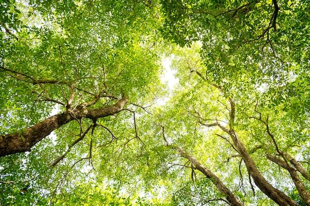 En levant les yeux dans une forêt verte au jour d'été ensoleillé