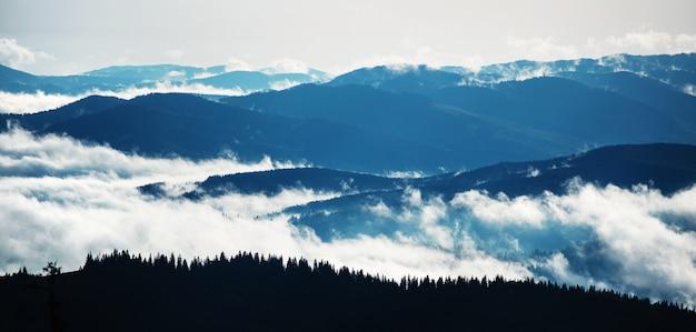 Lever du soleil dans une belle forêt dans les montagnes des carpates