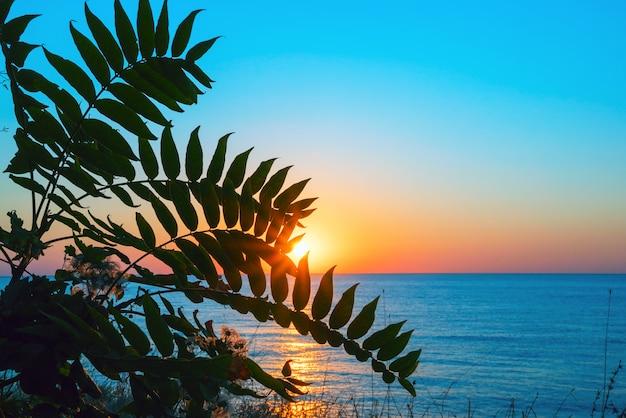 Lever du soleil sur la mer noire à travers les feuilles. crimée.