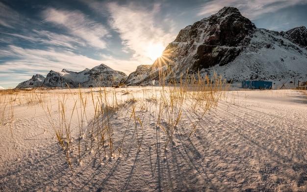 Lever du soleil sur la montagne avec touffe d'herbe sur neigeux