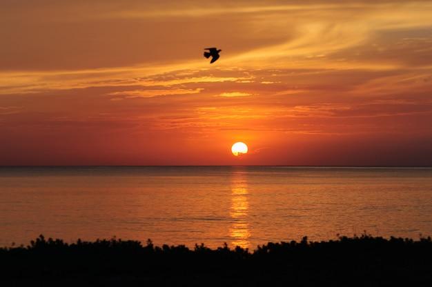 Lever du soleil sur la plage avec des oiseaux, samila beach songkhla, thaïlande