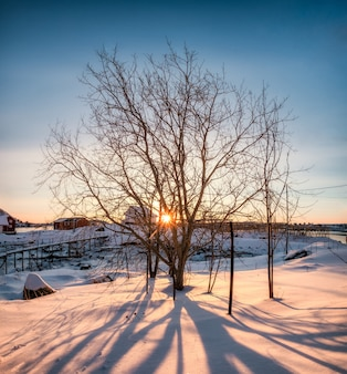 Lever du soleil à travers un arbre sec avec ombre sur neige