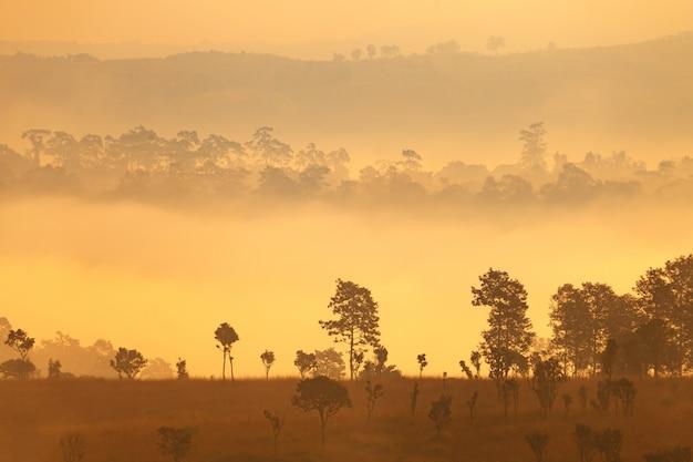 Lever de soleil matin brumeux au parc national de thung salang luang phetchabun
