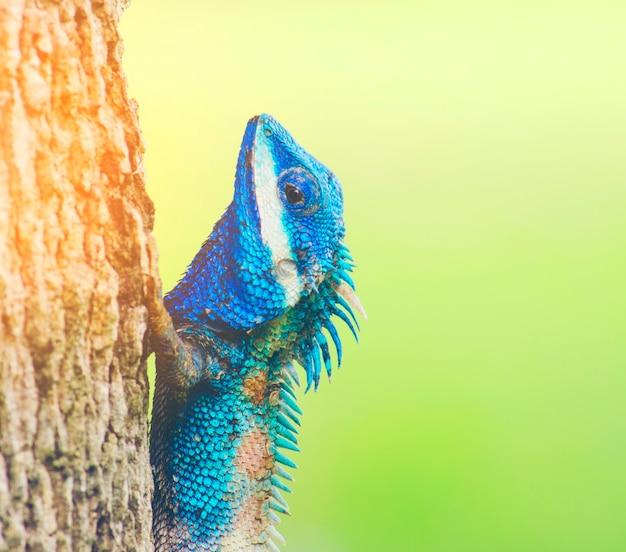 Lézard bleu avec de grands yeux dans les détails fermés