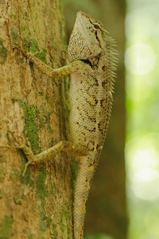 Les lézards jaunes sur les arbres sont colorés en harmonie avec la nature.