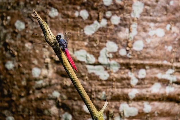 La libellule attrape un arbre de branche