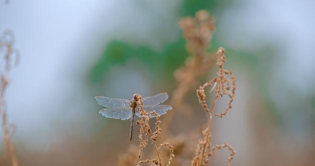 Libellule sur une brindille. gros plan, belle libellule dans la nature