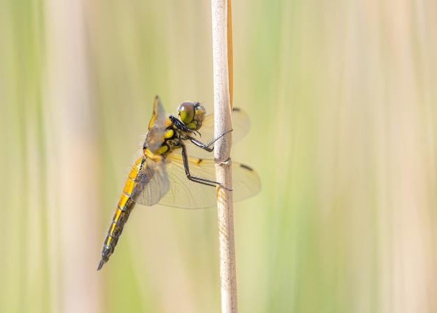 Une libellule est assise sur l'herbe