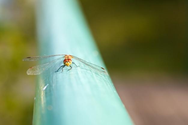 La libellule est assise sur la surface bleue