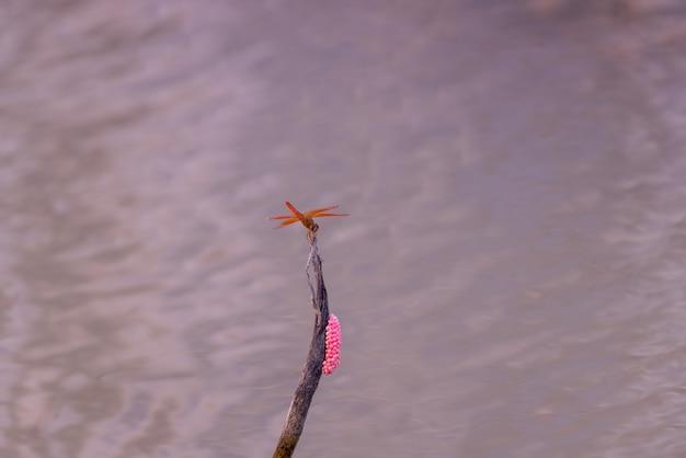 Libellules rouges reposant sur des branches