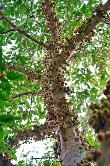 Libre vue à faible angle de branches d'un arbre en grappe entouré de feuilles épaisses