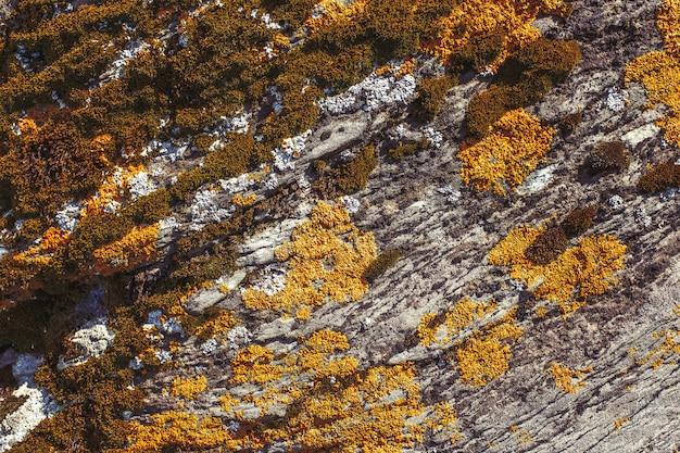 Lichen de couleur orange et verte sur la roche, fond de texture