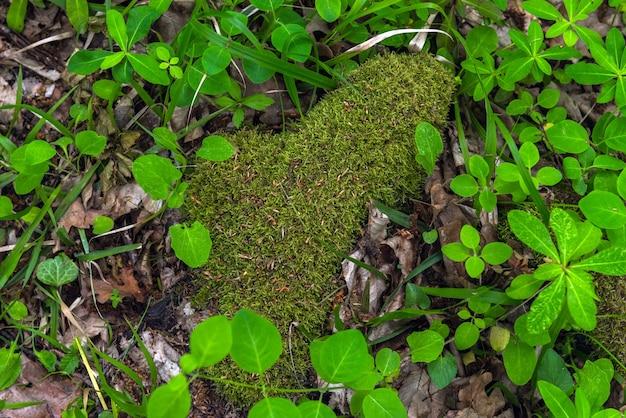 Lichen mousse dans la forêt