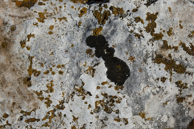 Lichen et mousse sur le vieux rocher