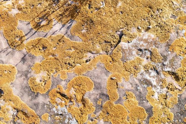 Lichen poussant sur un rocher. pierres couvertes de lichen. fond texturé naturel. orange tacheté