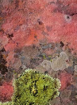 Lichen vert sur la texture de la roche rouge