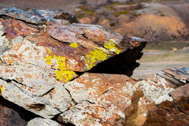 Lichens jaunâtres poussant sur une roche gris pâle
