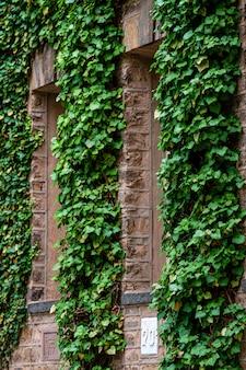 Lierre sur les murs des bâtiments éducatifs de l'université de princeton