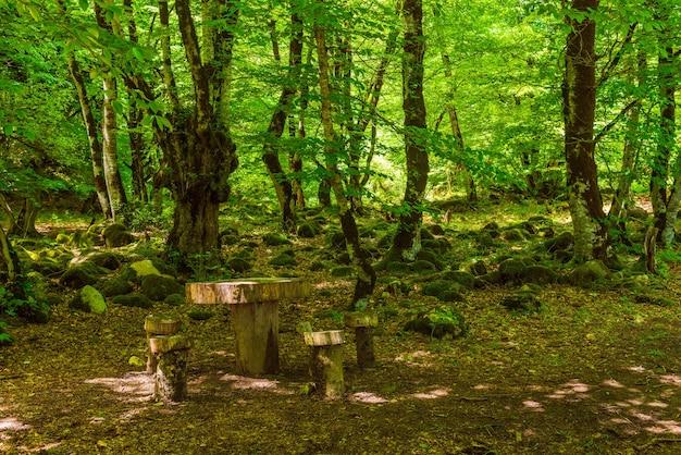 Lieu de pique-nique dans la belle forêt de feuillus verte