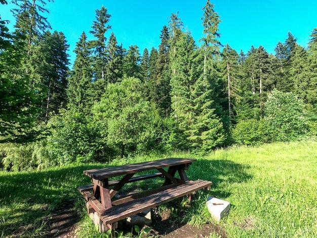 Lieu pittoresque de détente avec banc en bois en forêt