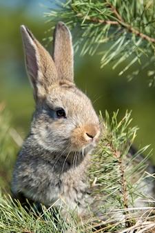 Lièvre lapin dans l'herbe en été