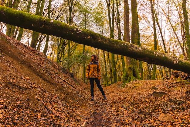 Lifestyle, une jeune brune en veste jaune marchant sous un arbre dans la forêt en automne. forêt d'artikutza à san sebastin, gipuzkoa, pays basque. espagne
