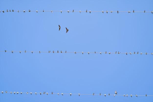 Ligne électrique d'alimentation dans le ciel. groupe d'hirondelles assis sur des lignes électriques