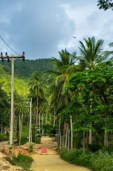 Ligne électrique dans la jungle. la civilisation arrive dans la jungle tropicale sauvage