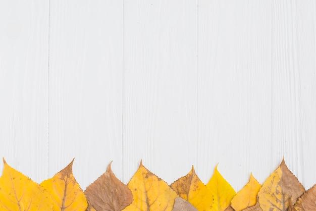 Ligne de feuilles d'automne