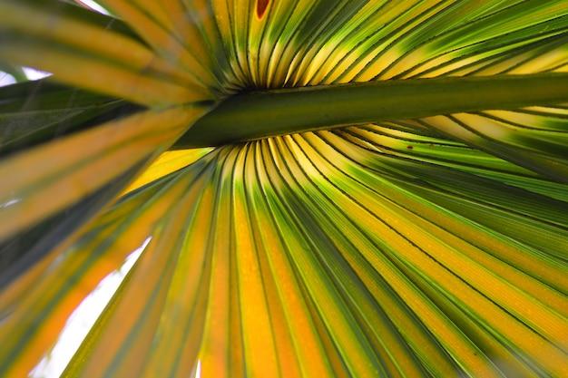 La ligne et les fibres sur fond de feuilles de palmier à sucre