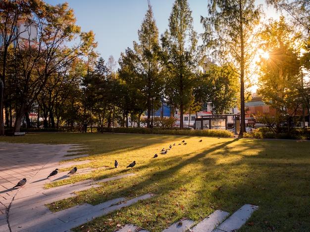 Ligne de pigeons dans le parc