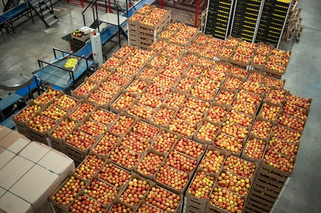 Ligne de production d'usine d'aliments biologiques et caisses pleines de pommes.