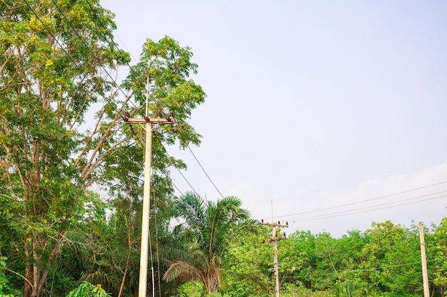 Ligne de transport d'électricité dans la nature