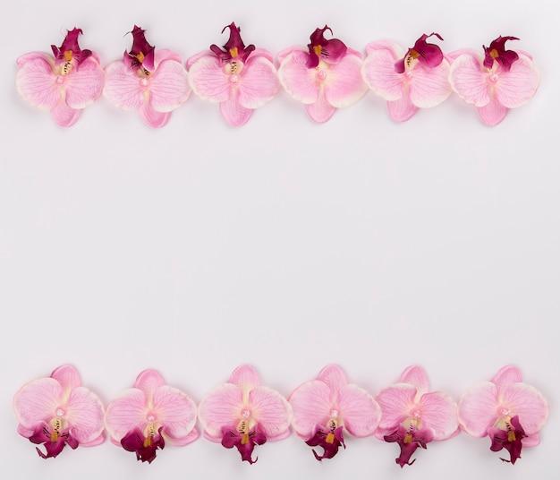 Lignes d'orchidées