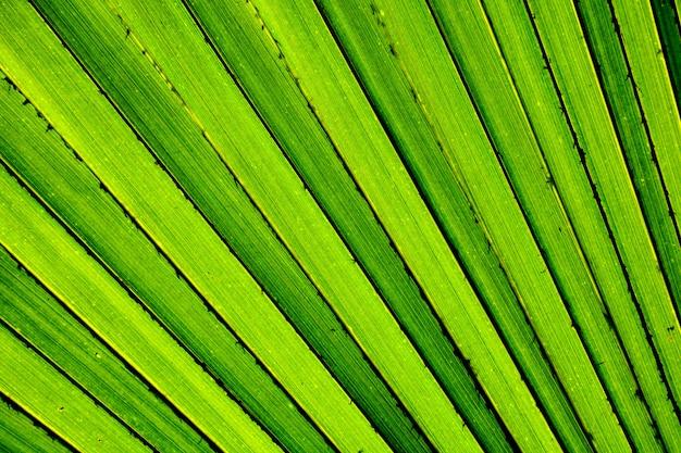 Lignes et textures de feuilles de palmier vertes