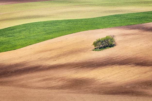 Lignes et vagues avec des arbres au printemps