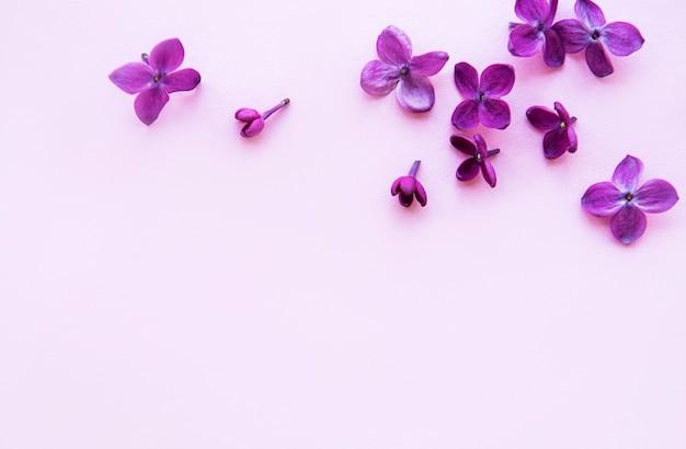 Lilas dans un style plat sur une surface rose