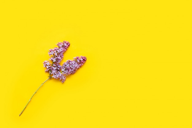 Lilas en fleurs sur fond jaune plat poser. fleurs violettes avec feuilles vue de dessus.