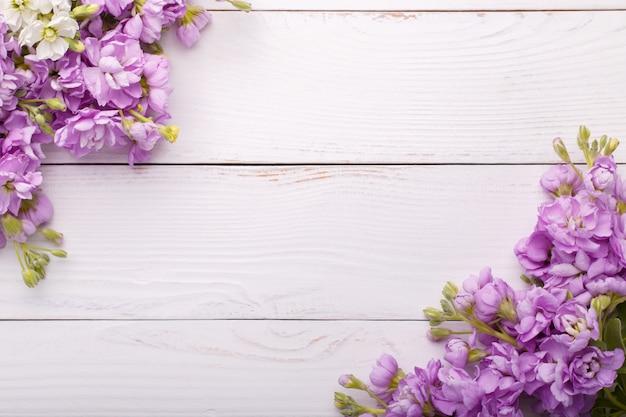 Lilas matthiola fleurs