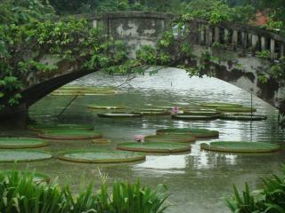 Lillies géants à bangkok parc