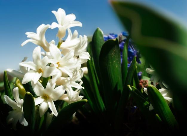 Lily au printemps dans un parc de la ville contre le ciel bleu.