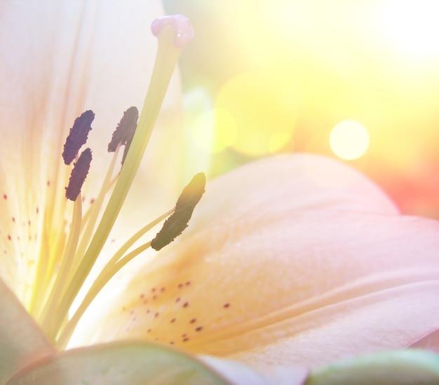 Lily fleur avec effet vintage