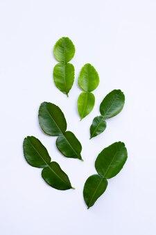 Lime kaffir bergamote feuilles ingrédient frais aux herbes isolé sur fond blanc.