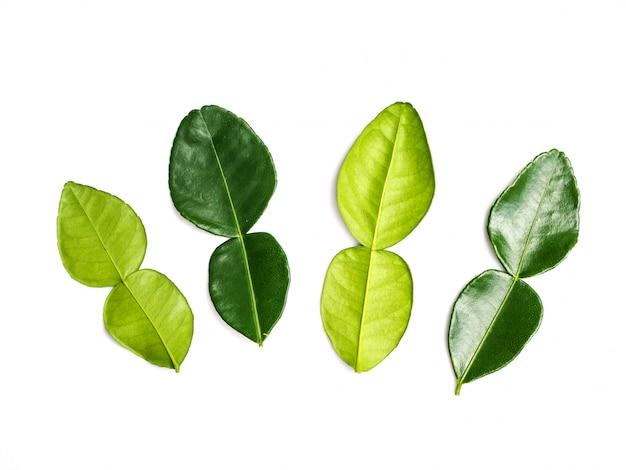 Lime kaffir laisse des feuilles de bergamote fraîche isolé sur blanc.