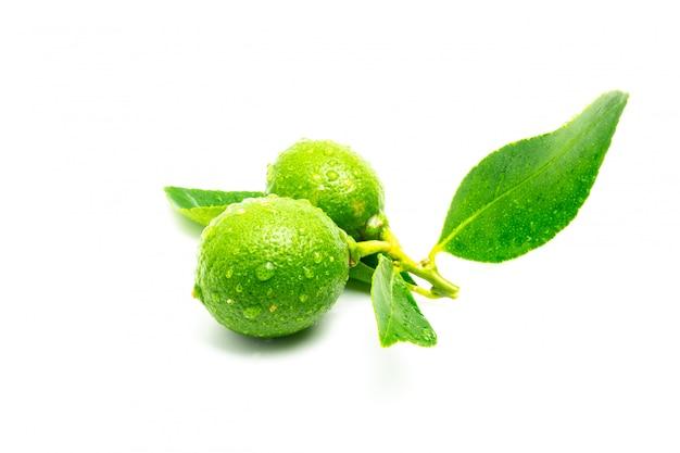 Lime verte isoler sur blanc