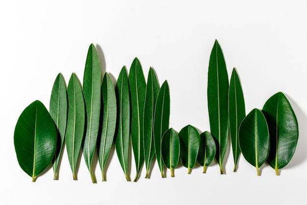 Limite forestière faite de feuilles vertes sur fond clair