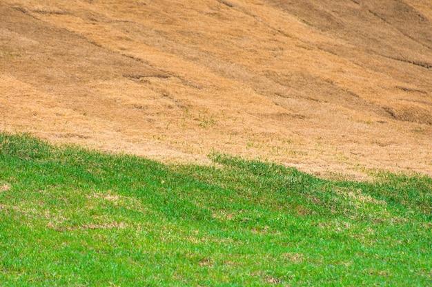 Limite nette entre l'herbe verte vivante et l'herbe sèche et morte.