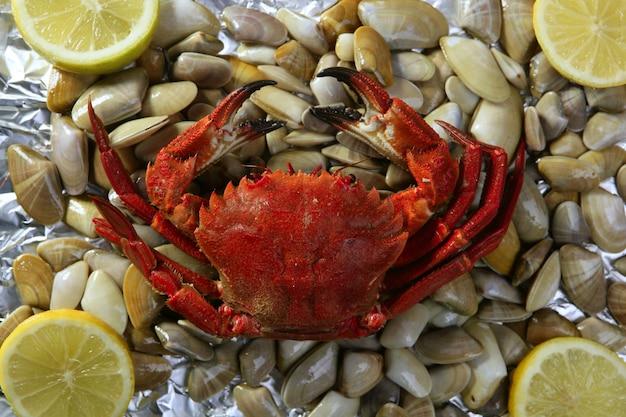 Lio carcinus puber crabe sur des palourdes