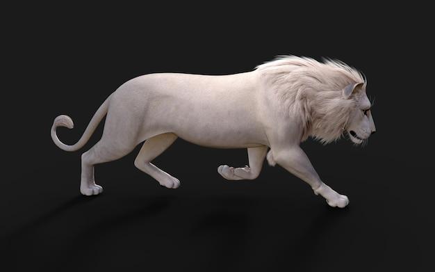 Le lion blanc agit et pose isolé sur fond noir foncé avec chemin de détourage roi lion