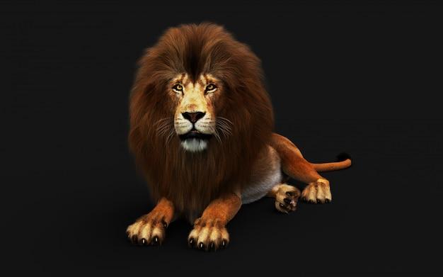 Lion dangereuse isolée sur fond noir, avec un tracé de détourage